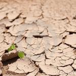 terra-seca-15700804